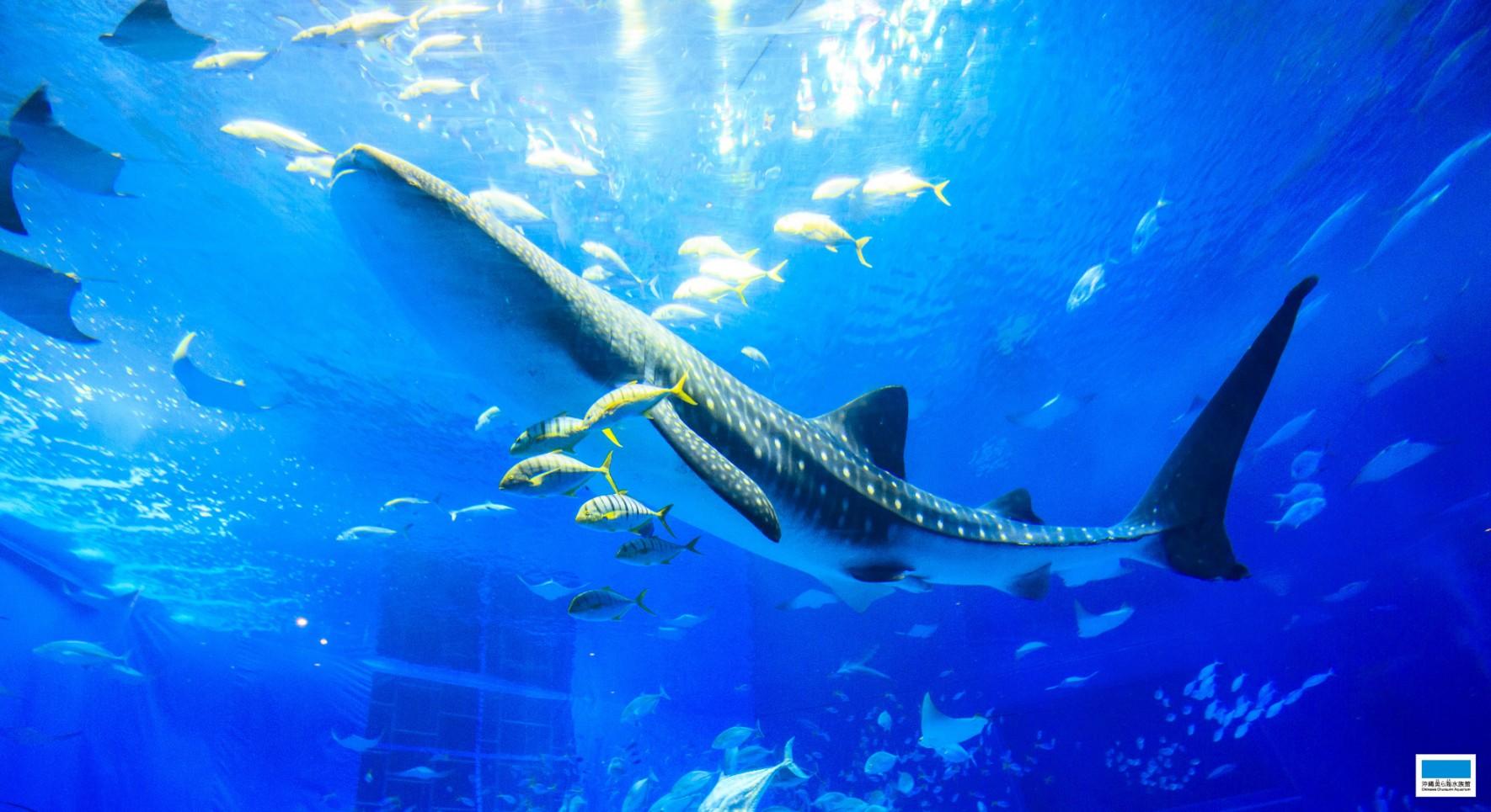ダウンロード 沖縄美ら海水族館 沖縄の美ら海を 次の世代へ