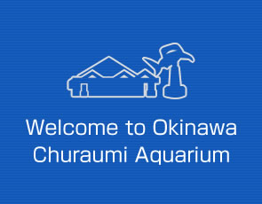 Welcome to Okinawa Churaumi Aquarium