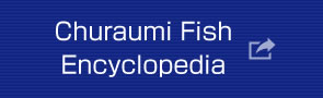 Churaumi Fish Encyclopedia