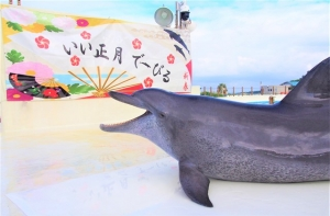 New Year Dolphin Show begins on January 1st! Starring the world record breaking dolphins  image