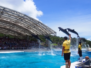 Okichan Theater dolphin show restarts on 1st October, 2020 (Thursday) An amazing show with six species of dolphin image