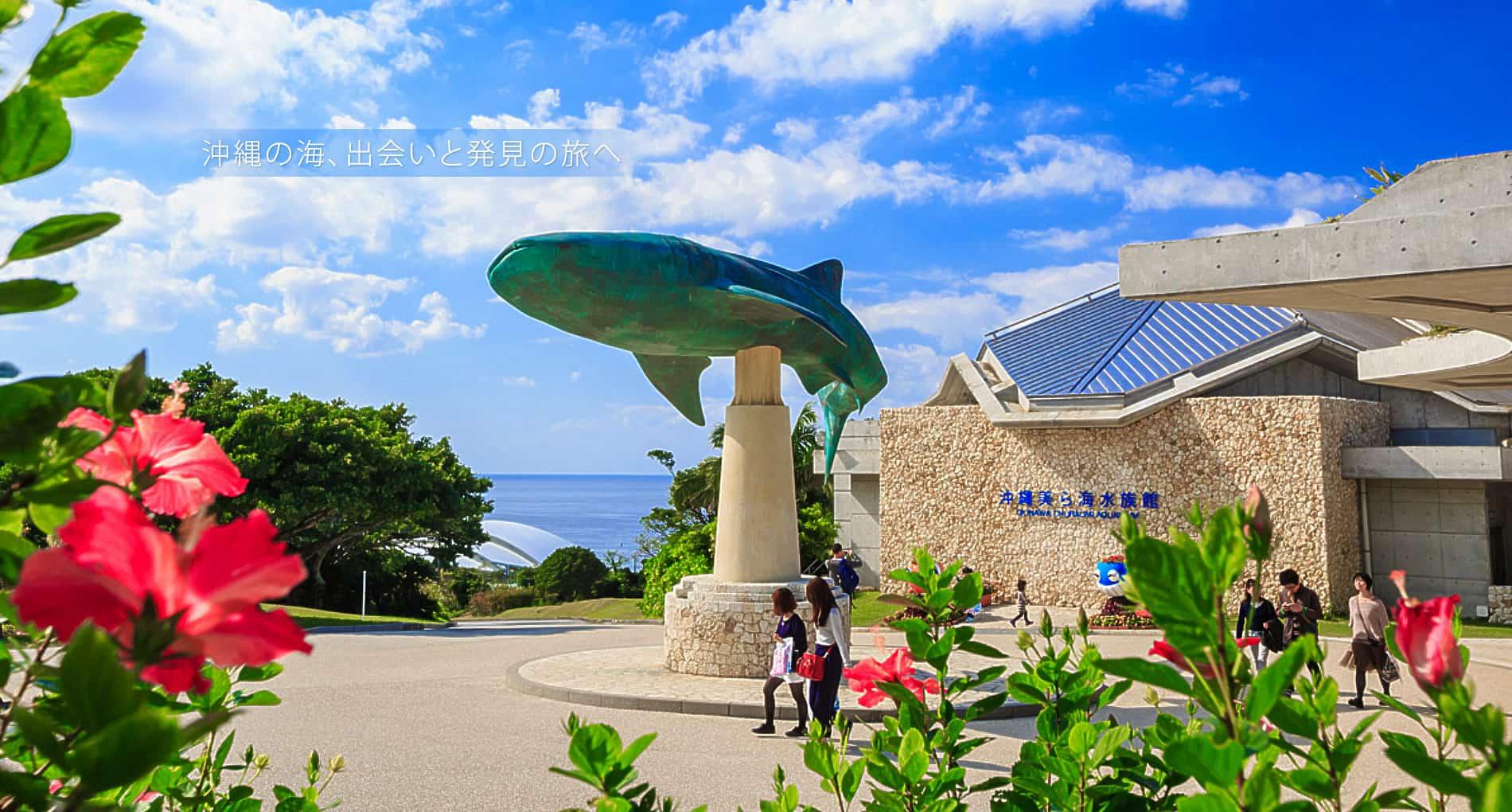 沖縄の画像 p1_35