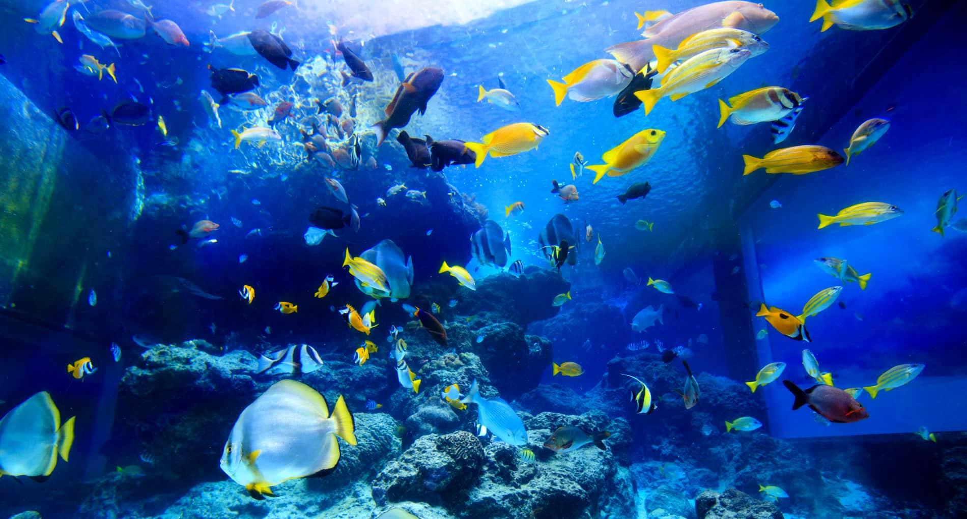 100 Japanese Aquarium Japanese Koi Markham Aquarium