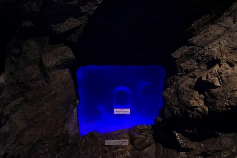 journey into the deep sea okinawa churaumi aquarium for the next