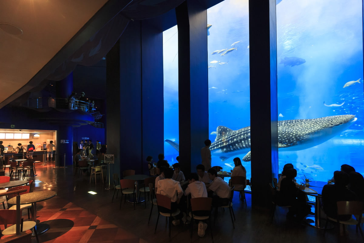 ocean blue cafe okinawa churaumi aquarium for the next
