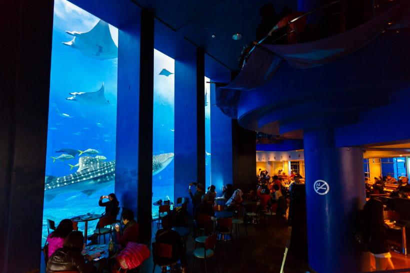 「美ら海カフェ フリー画像」の画像検索結果