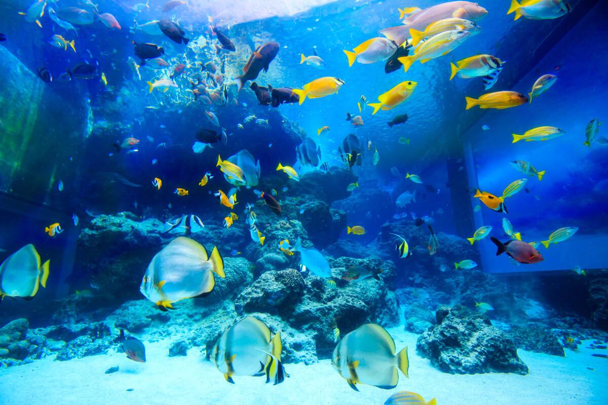 熱帯魚の海   沖縄美ら海水族館 ...