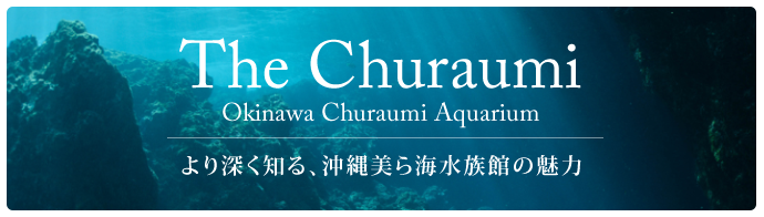 The Churaumi