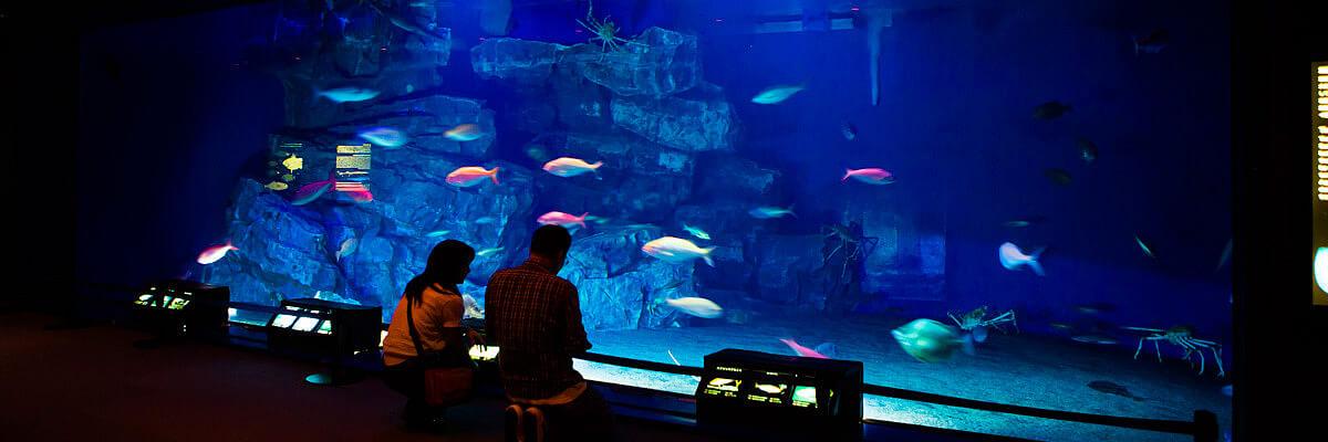 「深海の海」水槽