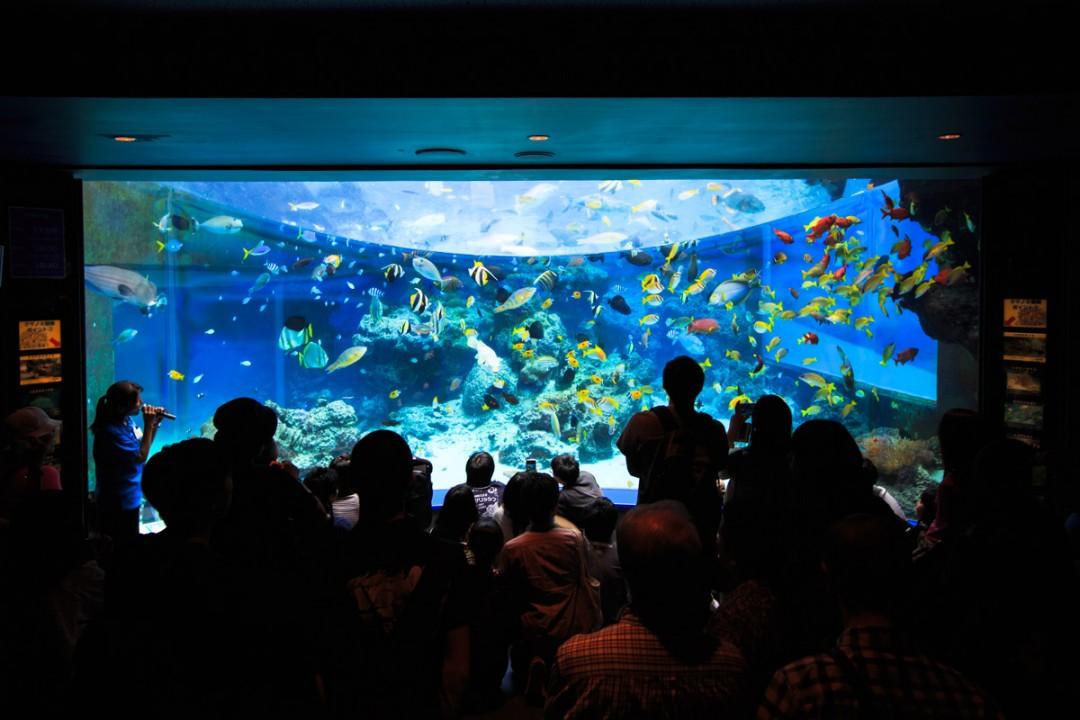沖縄のサンゴ礁を忠実に再現
