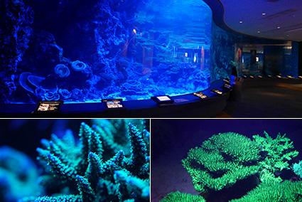 Design Aquarium Kast : The churaumi night aquarium is back topics okinawa churaumi